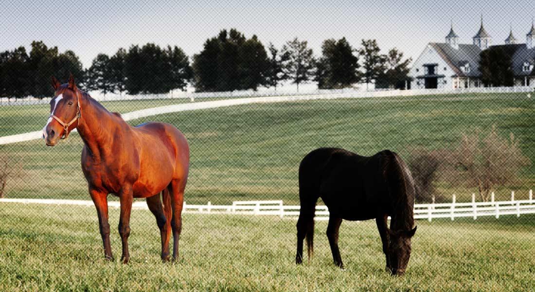 kentucky-horse-farm-background